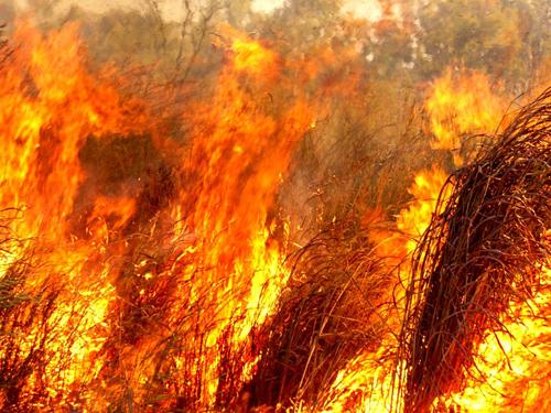 gamba intense fire Douglas