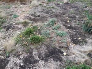 native grasses